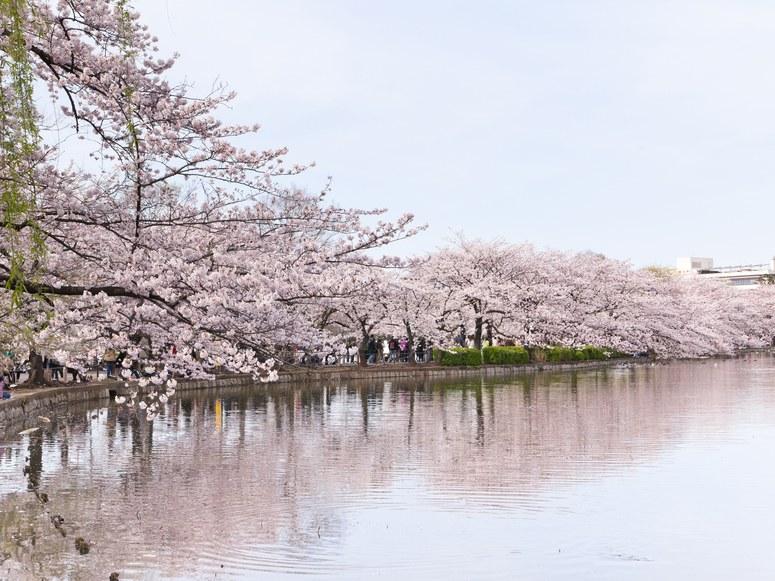 Ueno-Park-Tokyo-cr-getty